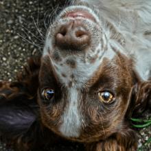 perro mejor amigo